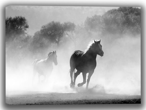 Galloping Horses. Black and White Canvas. Sizes: A4/A3/A2/A1 (3995)